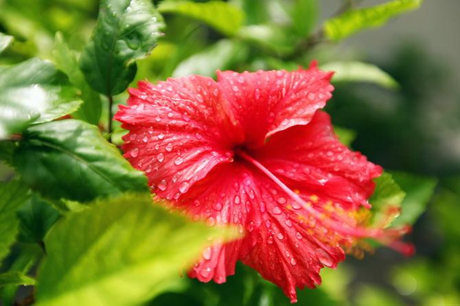 The-Cherry-Blossom-Girl-Maldives-152