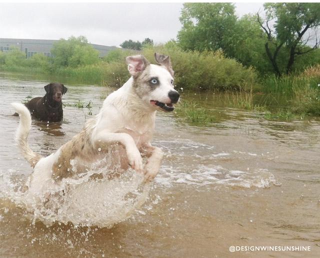 Design Wine Sunshine - Boulder I Love You - Boulder Flood Dog