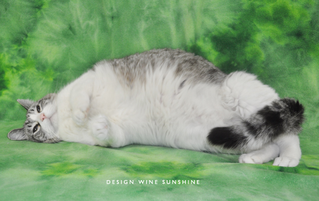 take-photos-of-shelter-cats-4