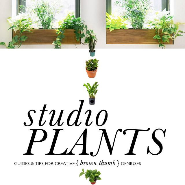 creative-studio-plants-for-brown-thumbs