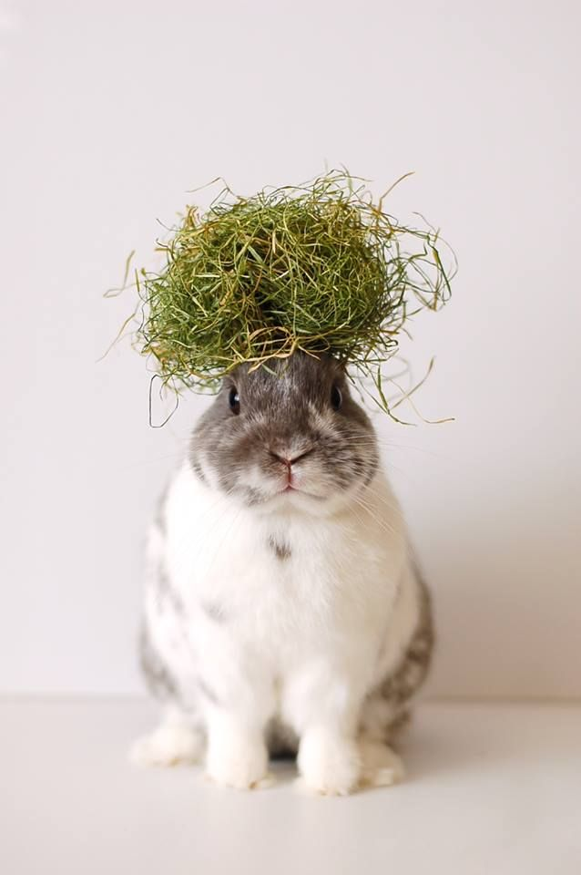bunny-with-grass-on-its-head